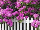 [+] Увеличить - Фотографии весенних цветов 3