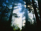 [+] Увеличить - В лесу