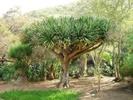 Посмотреть все фотографии серии Деревья