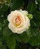 Посмотреть все фотографии серии Цветы