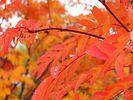 [+] Увеличить - Краски осень