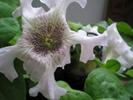 Посмотреть все фотографии серии Мои комнатные растения