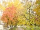 Посмотреть все фотографии серии Осень