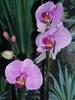 Посмотреть все фотографии серии Мой сад