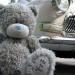 обои с Тедди 6
