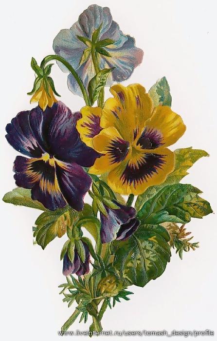 Gallery.ru / Фото #22 - Цветы и букеты 101 (фиалки, анютины глазки) - shennon.