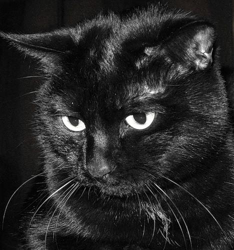 обожаю чёрных котиков!
