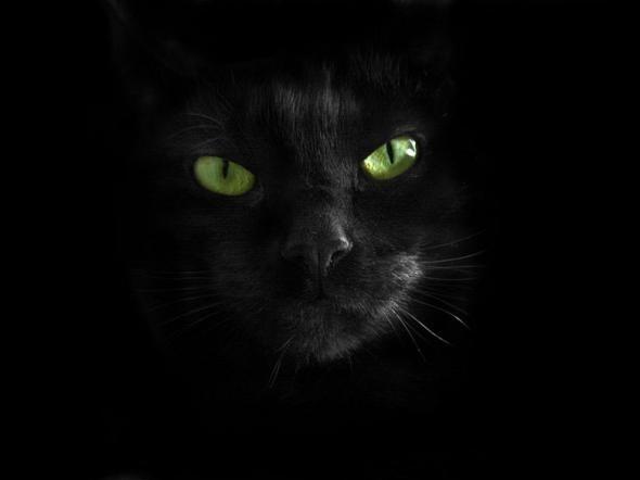 А как вы относитесь к чёрным кошкам 9.