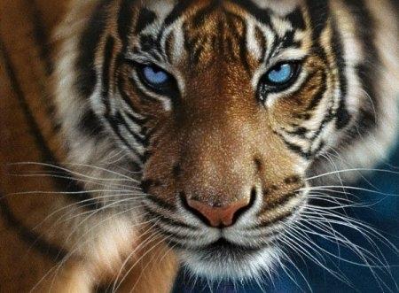 Картинки по запросу животных