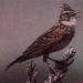 фото птицы средней полосы.