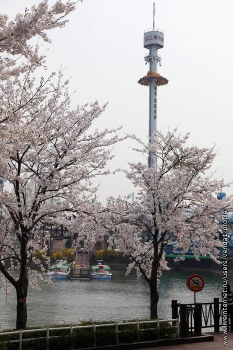 На Волшебном острове парка Лотте публика летитс высоты прямо в вишневые деревья.