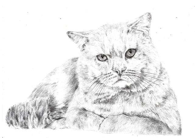 Рисунки карандашом животные
