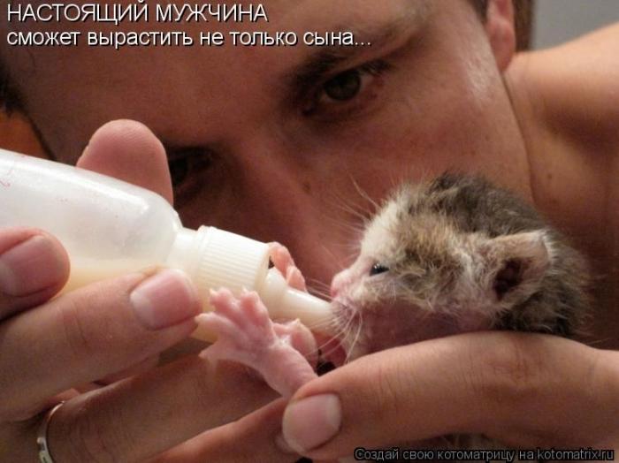 Какие милые котята!. Обсуждение на LiveInternet - Российский Сервис Онлайн-Дневников