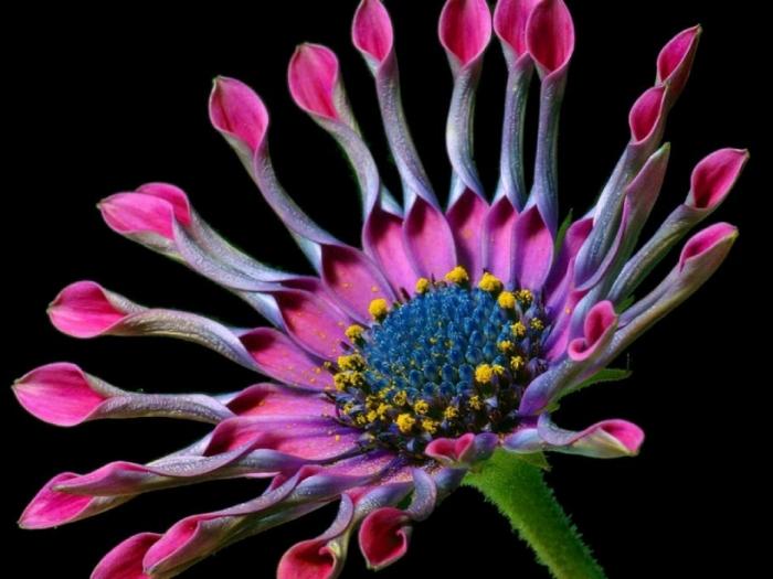 Красивейшие цветы мира фото с названиями