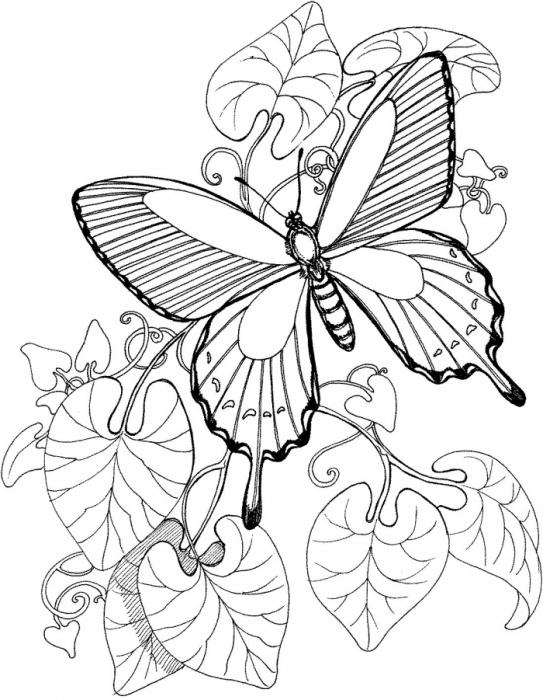 Картинки бабочек и цветов нарисованные 7