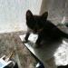 Пуфик- самый маленький кот.Пока..