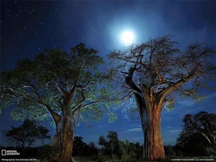 Baobab.Tanzaniya.