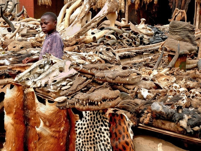 Колдуны и чародеи со всей Африки стекаются в Акодесеву, местечко в Того, где находится самый большой в мире рынок магических принадлежностей для ритуалов вуду.