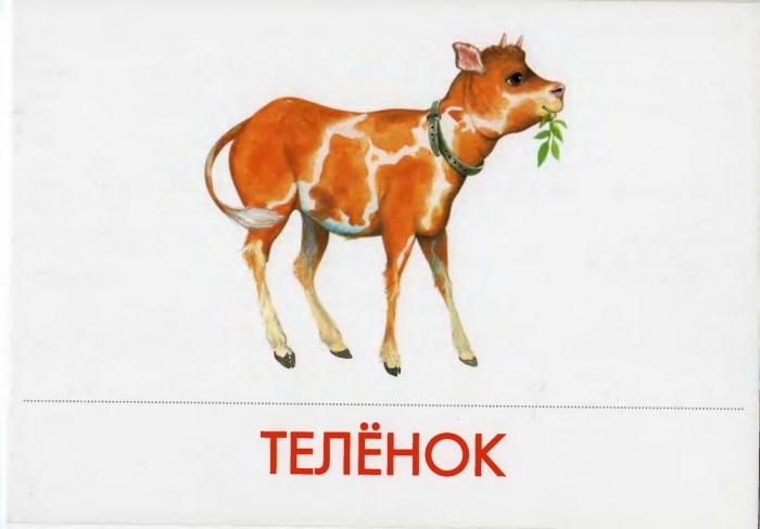 Рабочая Программа По Русскому Языку 3 Класс Полякова Фгос С Ууд