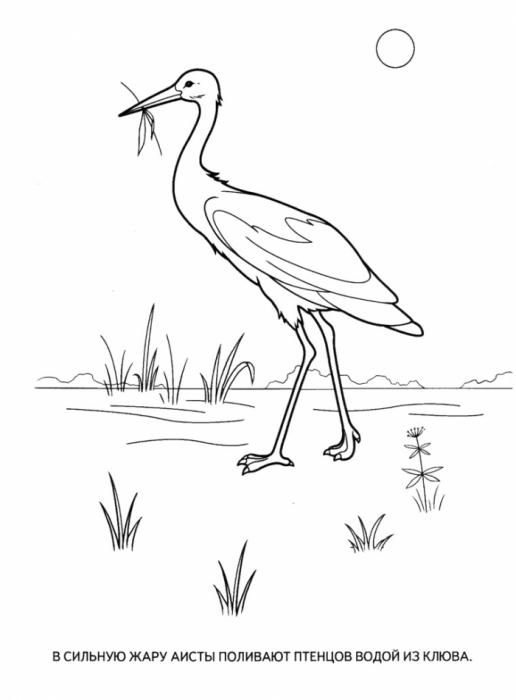 Раскраска перелетные птицы для детей