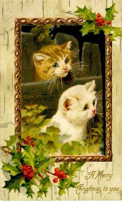 Такие смешные эти коты, немого наивные , с бантиками.  Нажимайте на фото для увеличения изображения.