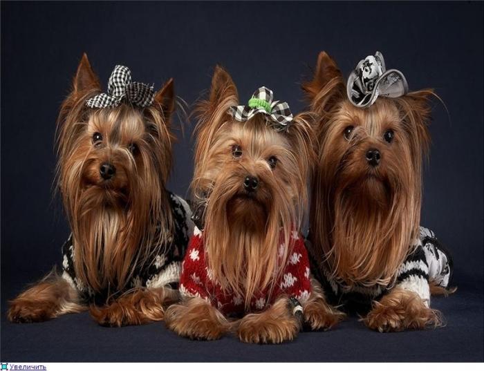 1 СП Бутик одежды и акссесуаров для собак * Совместные покупки в Братске - sp.bratsk.com.