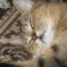 спит моя девочка