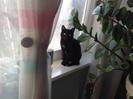Посмотреть все фотографии серии Мои котики
