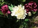 Посмотреть все фотографии серии Мои цветы из фоамирана