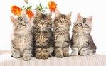 Посмотреть все фотографии серии кошки