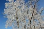 Посмотреть все фотографии серии Моя волшебница Зима