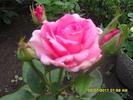 Посмотреть все фотографии серии Цветы из моего сада.
