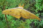 Посмотреть все фотографии серии Бабочки
