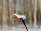 Посмотреть все фотографии серии Зима 2012-2013