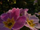 Посмотреть все фотографии серии цветы в полисаднике