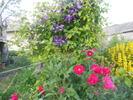 Посмотреть все фотографии серии цветуёчки