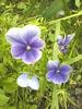 Посмотреть все фотографии серии цветы, лето 2012