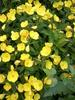 Посмотреть все фотографии серии цветы, лето 2012 (2)