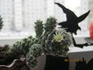 Посмотреть все фотографии серии Кактус расцвел!