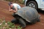 [+] Увеличить - Галапагосская черепаха