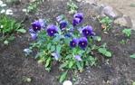 Посмотреть все фотографии серии Весна