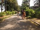 [+] Увеличить - Ботанический сад Зеленый мыс ( Батуми )