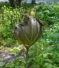 Посмотреть все фотографии серии Природа Северной Осетии