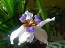 Посмотреть все фотографии серии Мои цветы