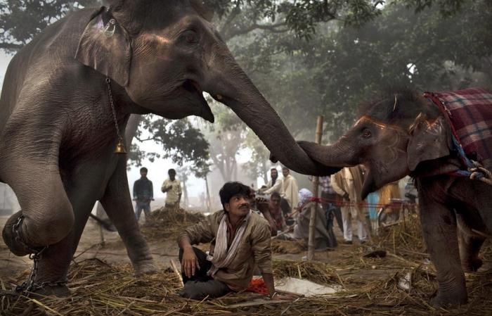Фотоальбом Индия 1