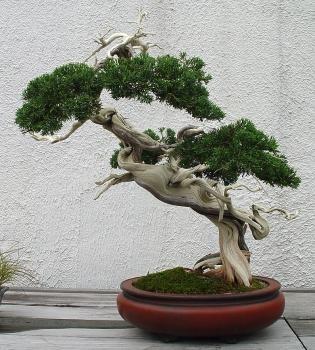 Природа :: Бонсаи и penjing фото 40.