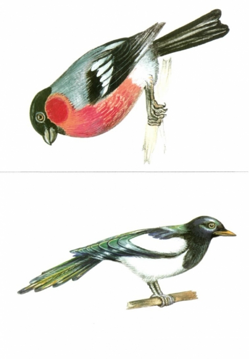 Занятия зимующие птицы старшая