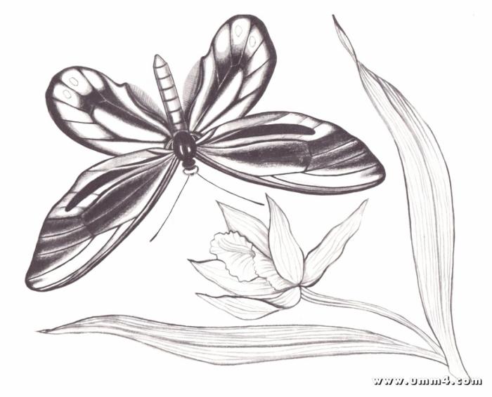 Картинки бабочек и цветов раскраски 3