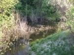 мусор в ручье парка Юбилейный (да здравствует ЧЕЛОВЕК!)