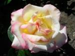 Вижу розы Богородицы в озареньи дня нездешнего..